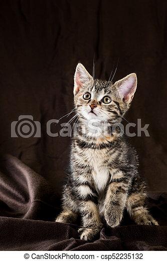 Portrait of tabby kitten with few red spots - csp52235132