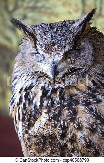 Portrait of The Eurasian Eagle Owl (Bubo bubo) - csp40568790