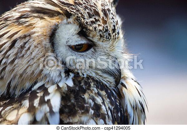 Portrait of The Eurasian Eagle Owl (Bubo bubo) - csp41294005