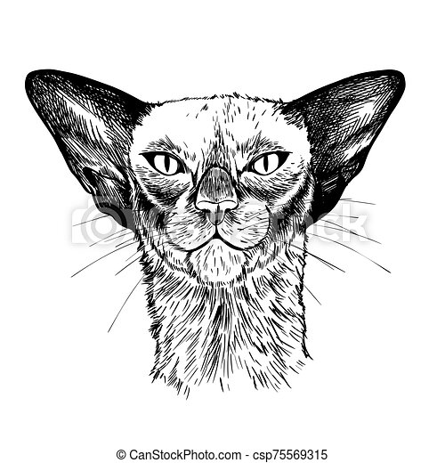 Portrait of the oriental cat, hand drawn vector - csp75569315