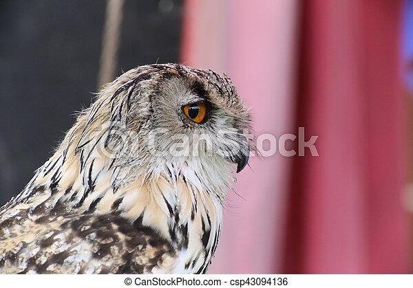 Portrait of western Siberian eagle-owl (Bubo bubo sibiricus) - csp43094136