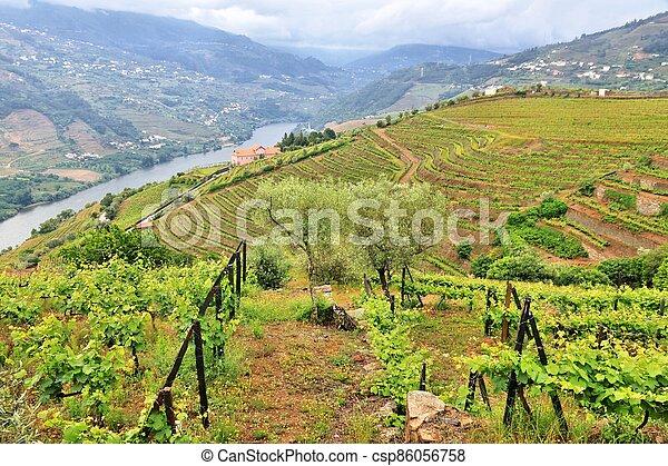 Portugal vineyard rural landscape - csp86056758