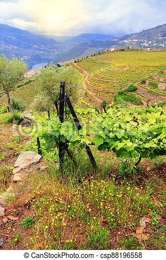 Portugal vineyards landscape - csp88196558