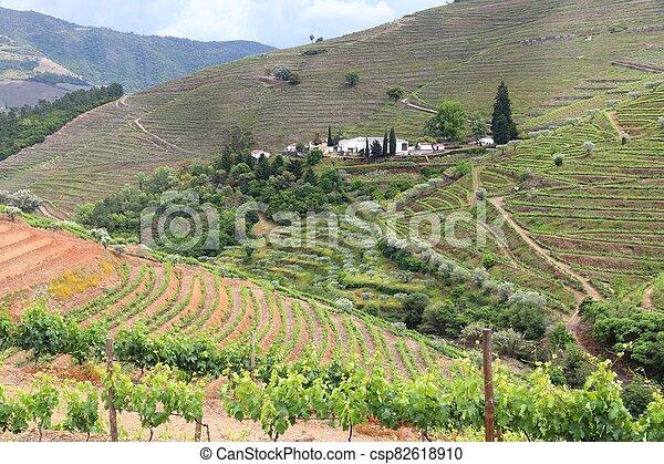 Portugal wine region - csp82618910