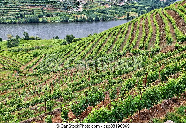 Portugal winery landscape - csp88196363