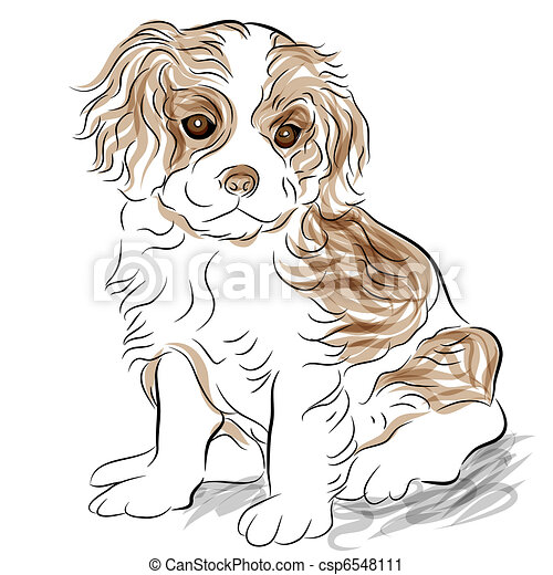 Posed Cavalier King Charles Spaniel Puppy Dog - csp6548111