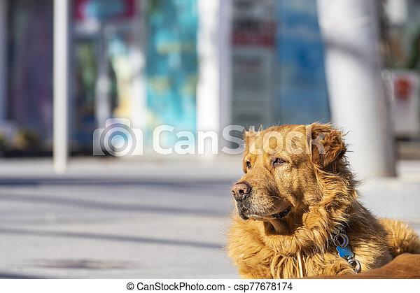 posing in the street - csp77678174