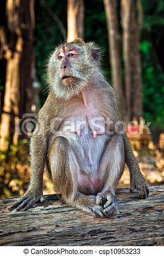 Posing monkey - csp10953233