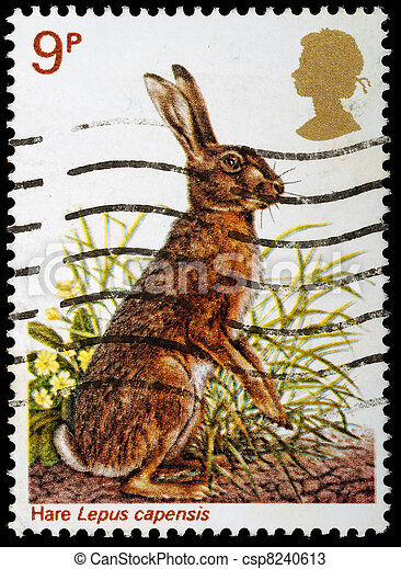 Postage Stamp - csp8240613