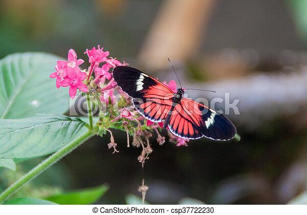 Postman butterfly - csp37722230