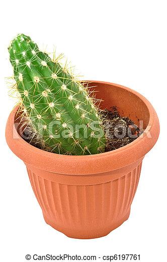Cactus en una olla. Aislado de fondo blanco - csp6197761