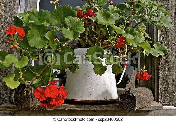 pot, fleurs, géranium, émail - csp23460502