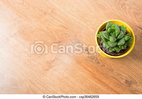 pot, haworthia, jaune - csp36462659