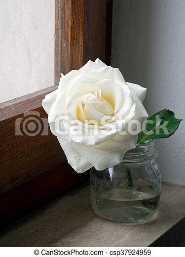 pot., roos, gezicht, sill, glas venster, witte , sunight. - csp37924959