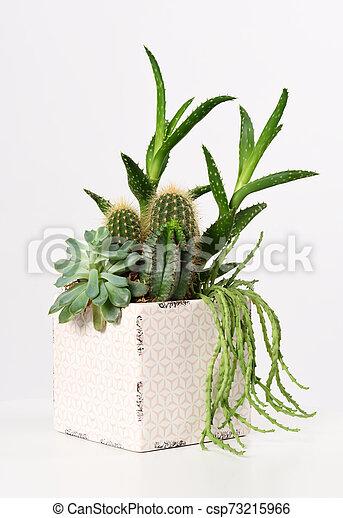 pot with mixed succulent plants - csp73215966