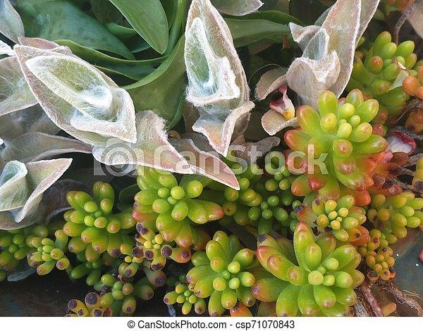 pot with succulent plants - csp71070843