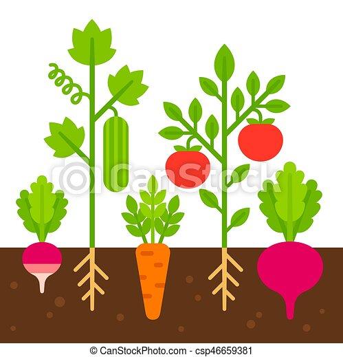 Potager illustration plat jardin vecteur illustration - Dessin de potager ...