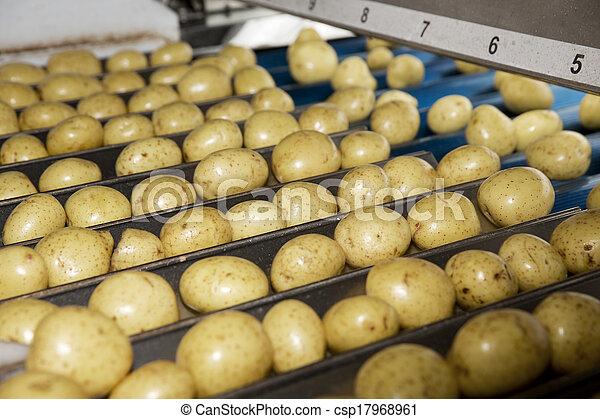 Potatoe Industry - csp17968961