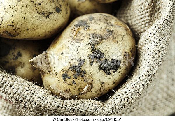 potatoes in a bag - csp70944551