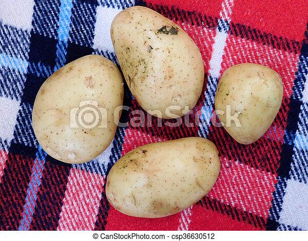 potatoes - csp36630512