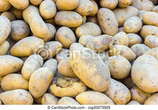 Potatoes - csp20073929