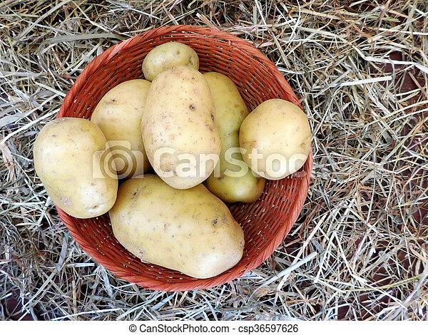 potatoes - csp36597626