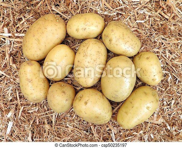 potatoes - csp50235197