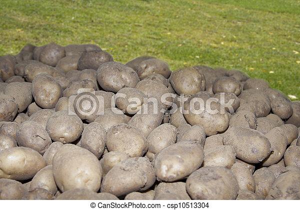 potatoes - csp10513304
