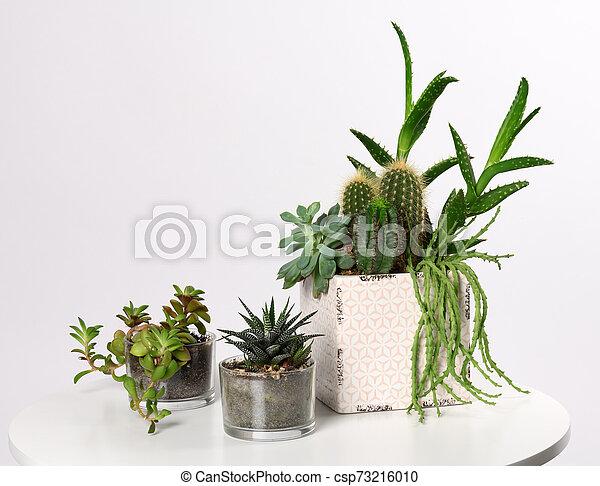 pots with mixed succulent plants - csp73216010