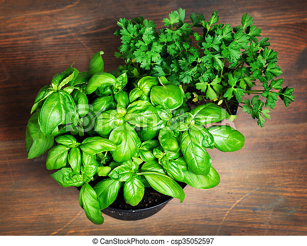 Pots with parsley and basil - csp35052597
