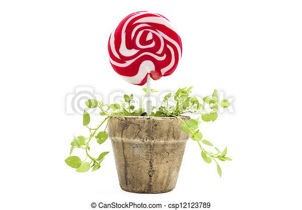Potted lollipop - csp12123789