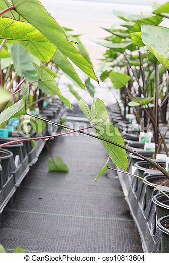 potted plants - csp10813604