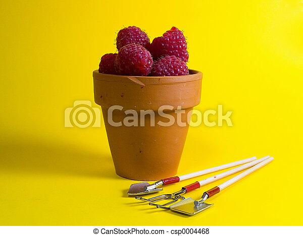 Potted Rasberries - csp0004468