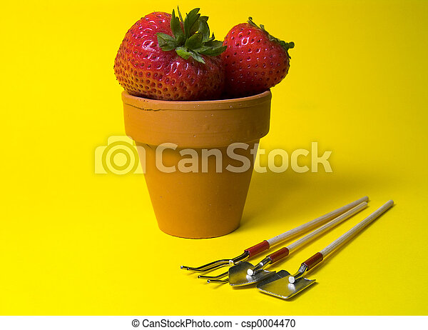 Potted Strawberries - csp0004470