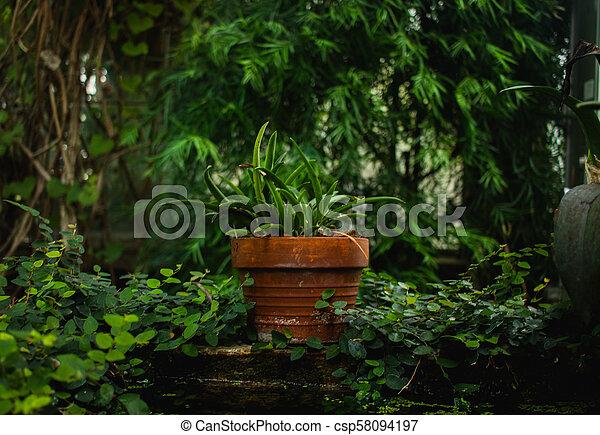 Potted succulent - csp58094197