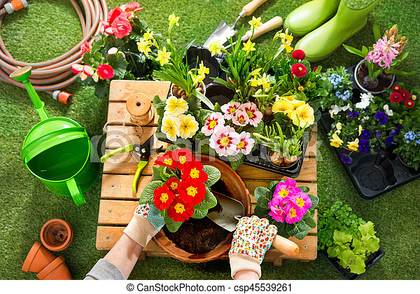 Potting flowers in the garden potting spring flowers in the sunny potting flowers in the garden csp45539261 mightylinksfo
