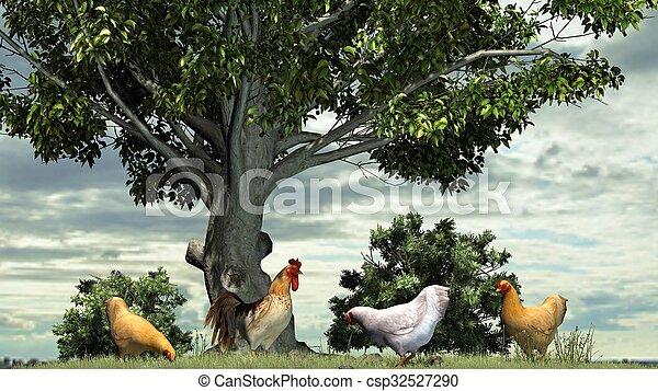 poulets, coq - csp32527290