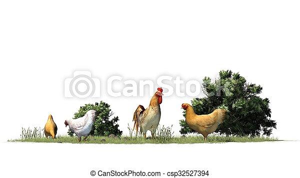 poulets, coq - csp32527394