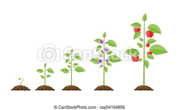 Pousse Fruit Croissance Plante