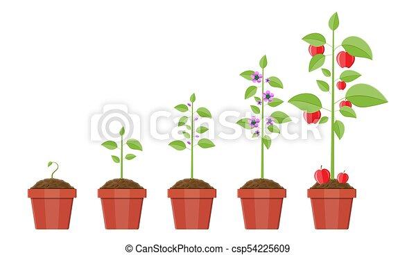 Pousse Plante Croissance Fruit Pot