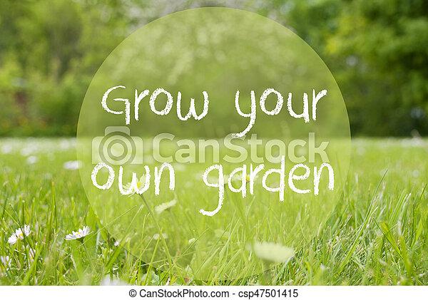 pré, propre, jardin, citation, gras, grandir, fleurs, pâquerette, ton