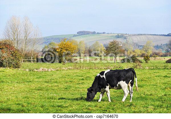 pré, vache - csp7164670