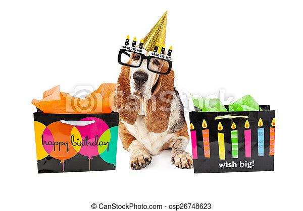 anniversaire vieux chien