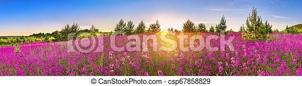 Paisano de primavera con flores en la pradera - csp67858829
