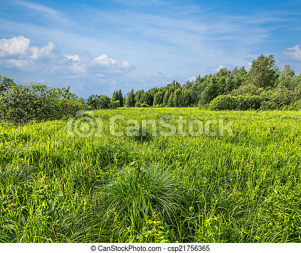 Green Meadow - csp21756365