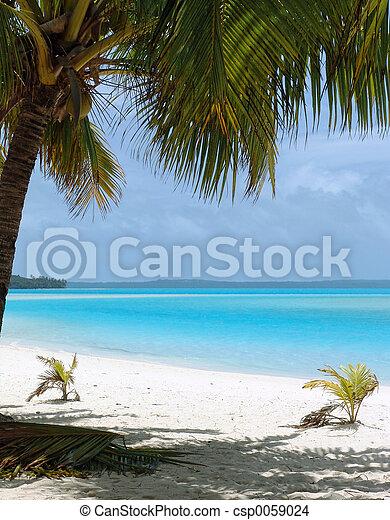 praia, árvore palma - csp0059024