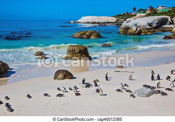 praia, atlântico, arenoso - csp40012385