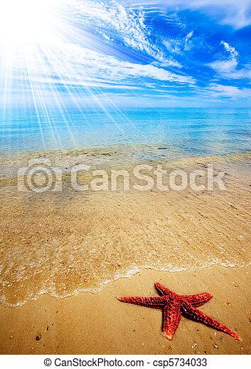 praia, starfish - csp5734033