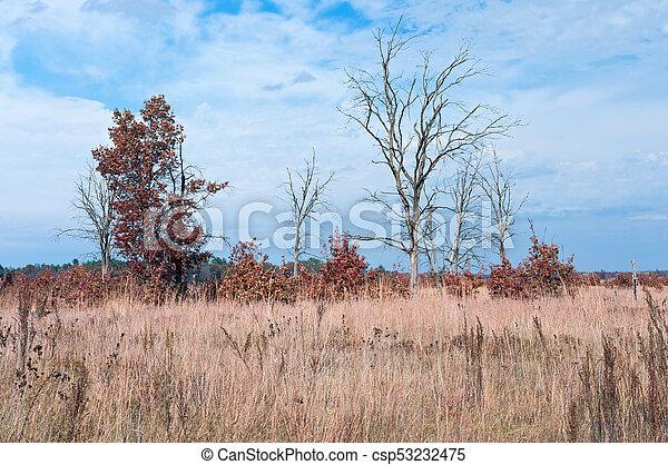 Prairie and Oak Savanna Habitat - csp53232475