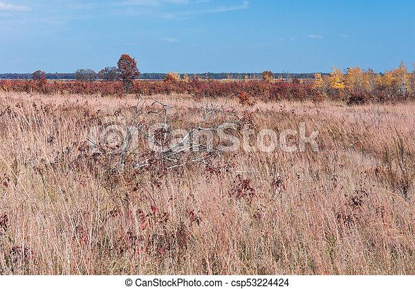 Prairie and Savanna at Necedah - csp53224424